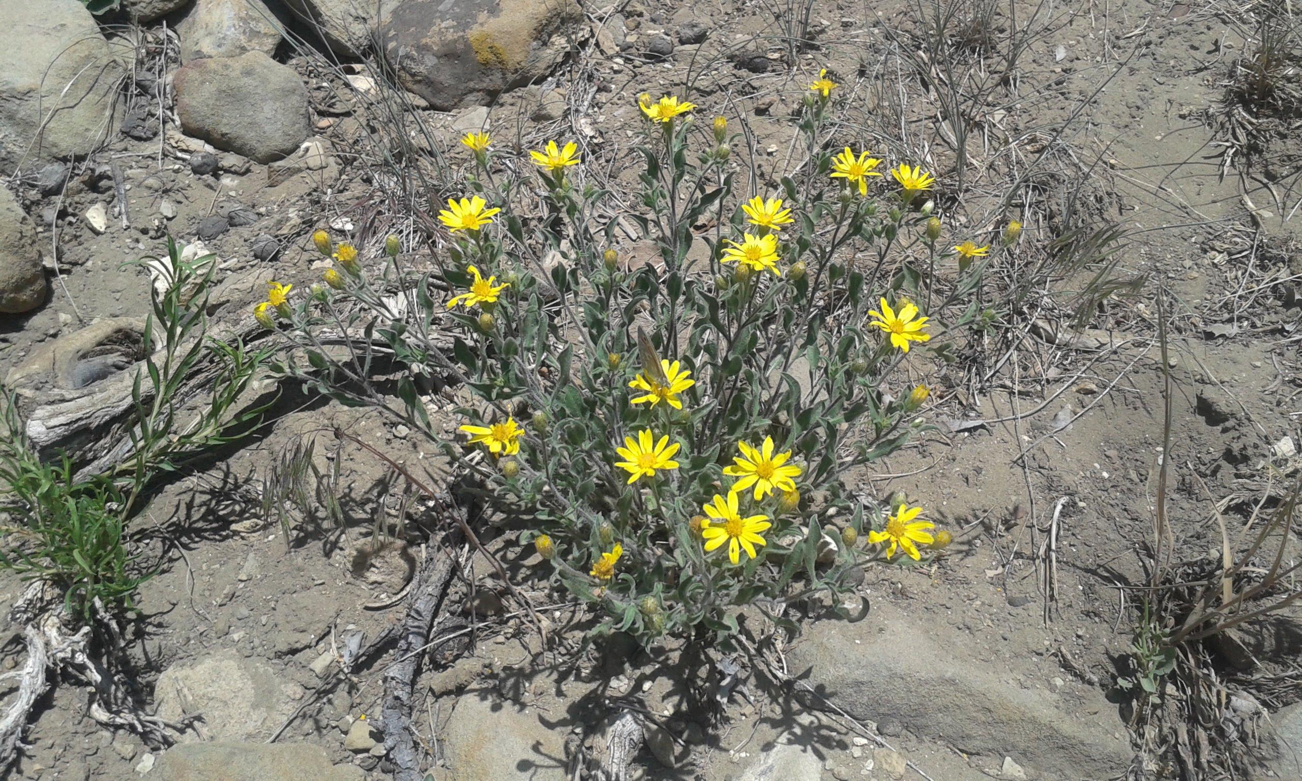 natural beauty, desert hardy.