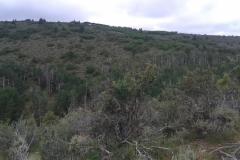 Pr Springs Canyon