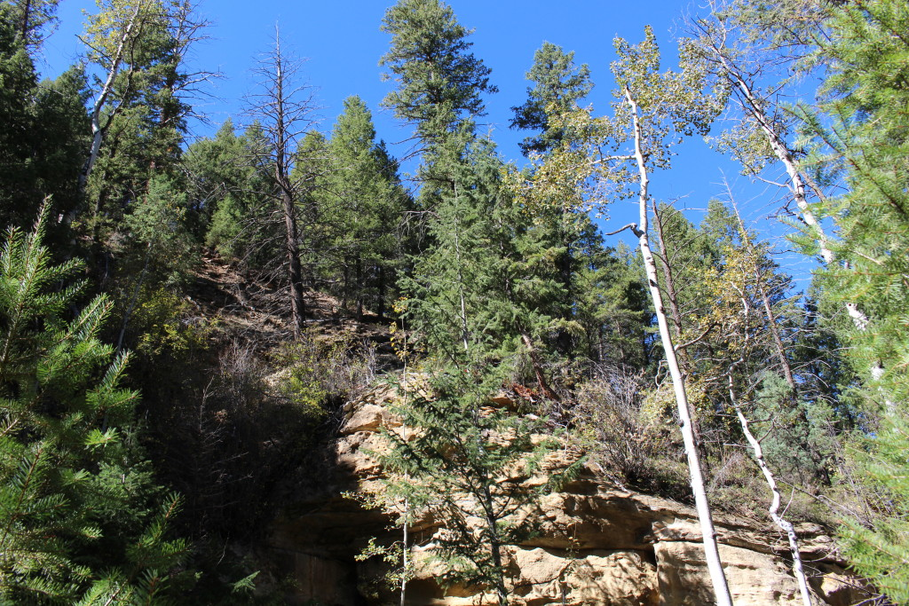 MC, trees on rocky slope 2