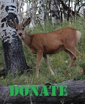 buck-donate-smalll